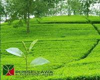 Pussellawa Plantations Ltd