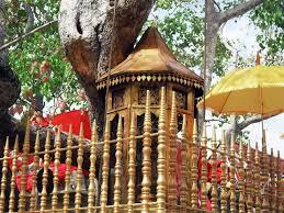 SRI MAHA BODHIYA