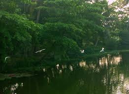 Attidiya Bird Sanctuary
