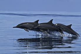 Dolphin Watching in Kalpitiya