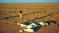 Somalia Warns of Famine