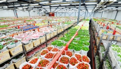 The Netherlands assists Sri Lanka to improve horticultural industry.