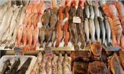 Seafood exporters welcome GSP+ restoration
