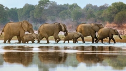 Tanzania's Selous reserve 'could lose all elephants' by 2022
