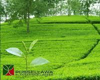 Pussellawa Plantations Ltd