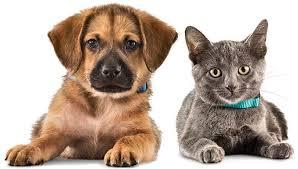 Uni Vet Animal Clinic