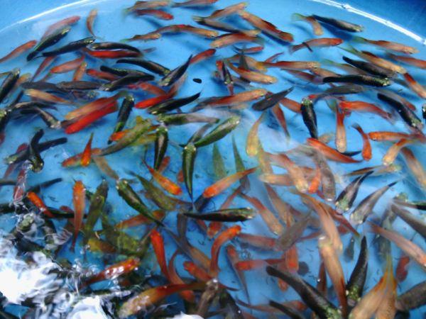 Mihidinu Aquarium and Fish Farm
