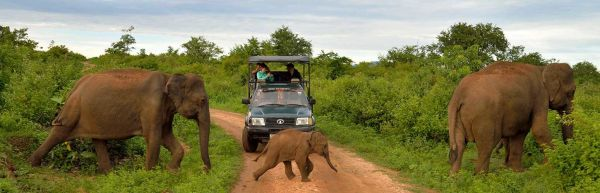 Taprobane Holiday Tours