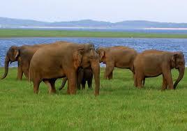 Kaudulla National Wildlife Park.