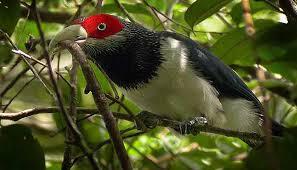 KITHULGALA – KELANI VALLEY FOREST RESERVE
