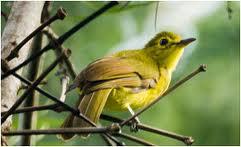 INGIRIYA/BODINAGALA FOREST RESERVE