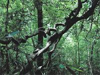 MITHIRIGALA FOREST RESERVE