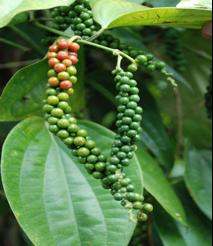 Lanka Organics Pvt Ltd