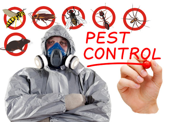Smleco pest control
