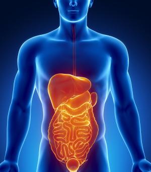 Gastrointestinal Surgeons
