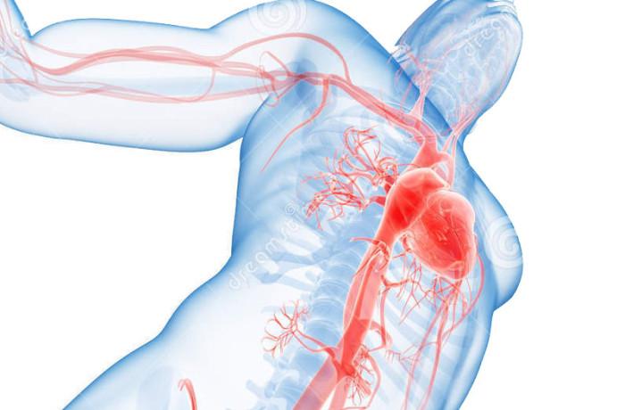 Vascular Surgeons
