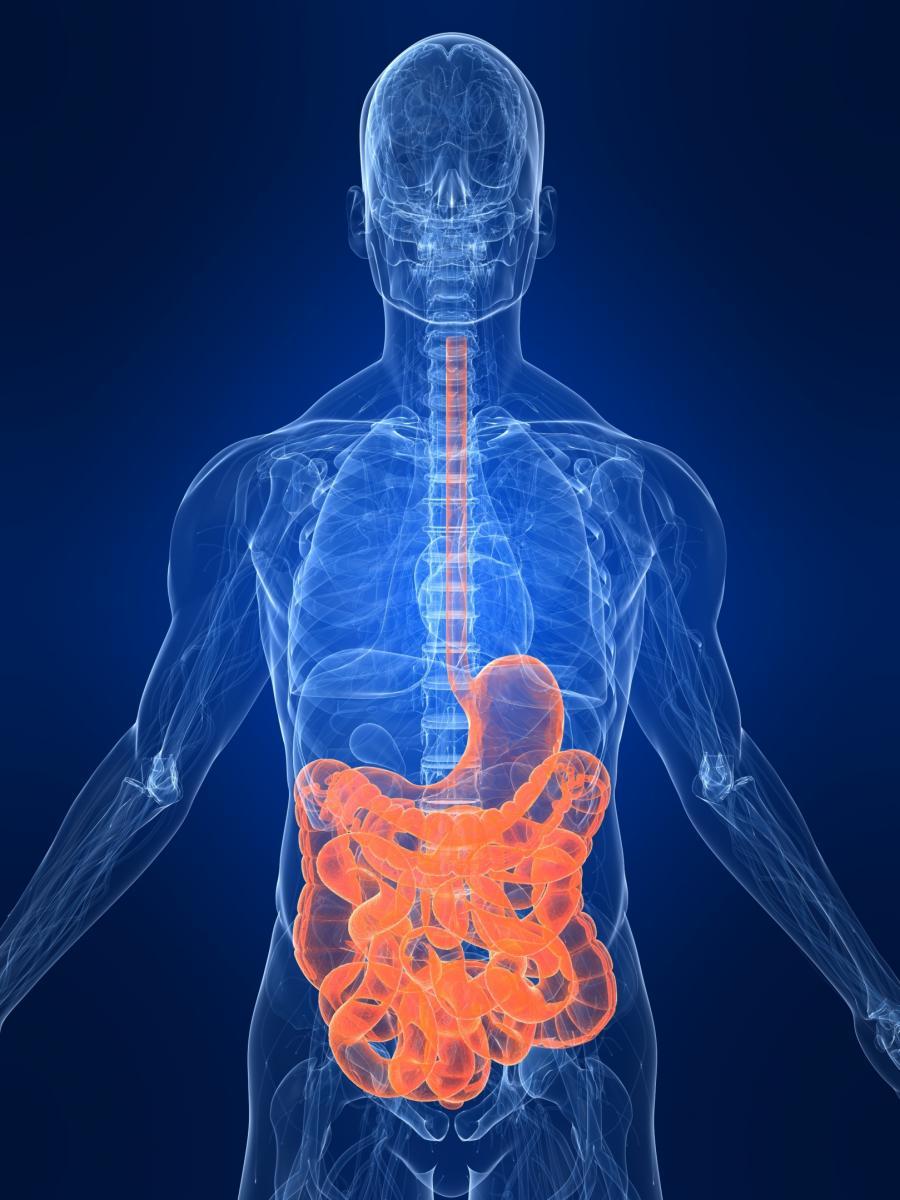 Gastrointestinal Surgeon