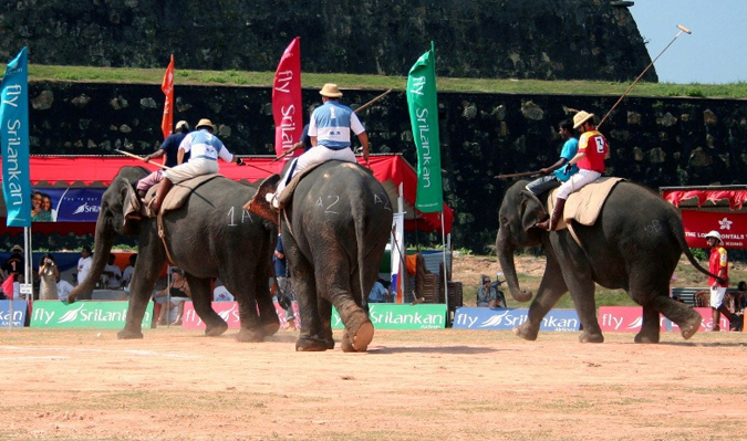 Elephant Polo Tournament