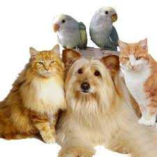 Pets V Care
