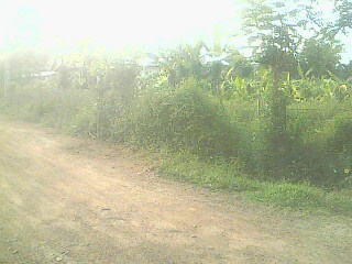 1/2 ACRE OF LAND AVAILABLE FOR PURCHASE IN BERUKETIYA, MORAGAHAHENA
