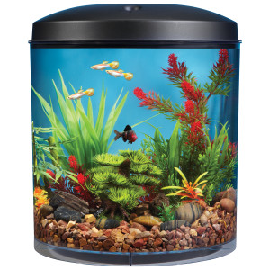 Ceylinco Ornamental Fish Aquarium (Pvt) Ltd