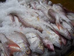 Tropic Fishery Pvt Ltd