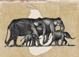 Sri Lanka Wildlife Conservation Society