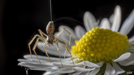 Study Finds Even Spiders Get Grumpy When They're Alone Too Long