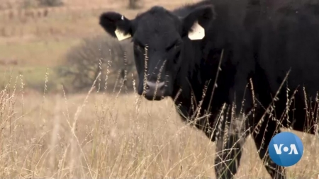 Ranchers Combat Overgrazing to Protect Climate