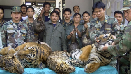 US Pledges $90 Million as World Leaders Gather to Tackle Illegal Wildlife Trade